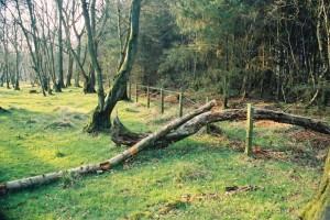 Scots Dyke (broken fence)